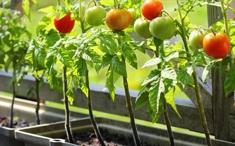 Faire pousser ses légumes en pot