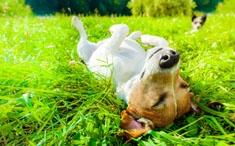 Le printemps et nos animaux