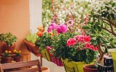 Des plantes anti moustiques
