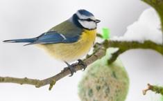 Aider les oiseaux pendant l'hiver