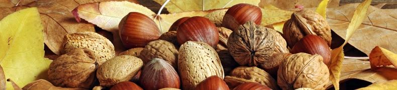 L'Automne, la saison des fruits à coques