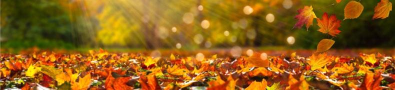 En route pour l'automne